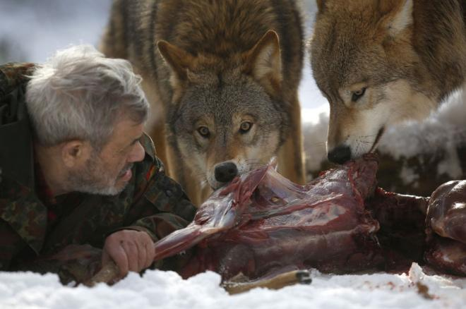 meet-wolf-man-german-researcher-werner-freund