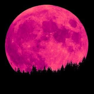 Luna rosa 2013