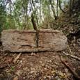 Gli archeologi al lavoro nella giungla messicana hanno scoperto una grande città Maya, completa di monumenti e iscrizioni. La città si trova nel Campeche (Il nome Campeche deriva dalla cittàMayadiKan […]