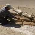 Il deserto peruviano dell'Ocucaje restituisce all'umanità altri brandelli di conoscenza: i resti fossili ritrovati in questi giorni potrebbero essero l'anello finora mancante tra i mammiferi acquatici odierni e i loro […]